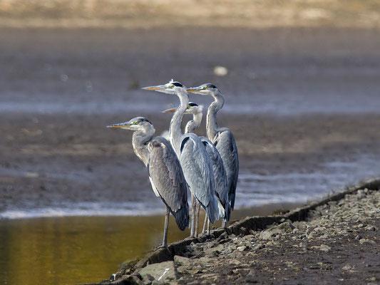 """abwarten....irgendwann kommt vielleich mal ein Fisch """"vorbeigeflogen""""..;-))"""