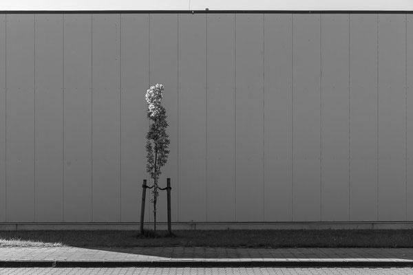 Baum vor Fassade einer Industriehalle