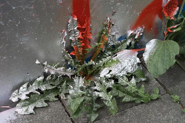 Silber angesprühter Löwenzahn an einem Graffiti
