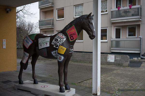 Braunschweig: Pferd