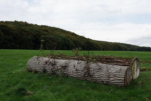 Baumstamm auf einer Wiese bei den Baumbergen.