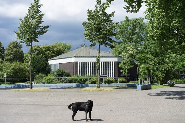 Der Schwarze Hund / Black dog