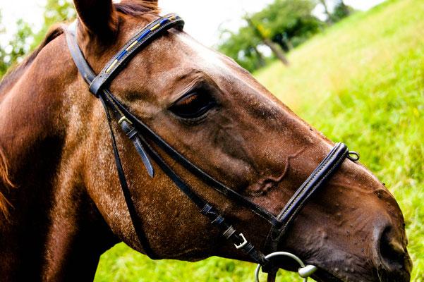 Coaching für Pferde in Weilheim a.d. Teck