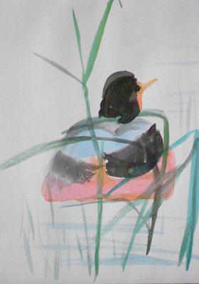 Ente (nach Pien Cheng), Reibetusche und Aquarell 2014