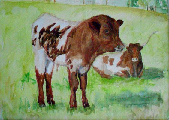 Longhornkalb mit Mutterkuh, Aquarell 2015, verkauft