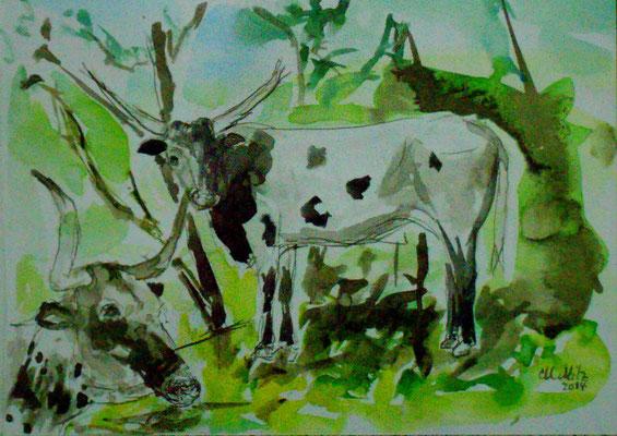 Longhorns auf der Frühlingsweide, Aquarell/Sepia 2014, verkauft