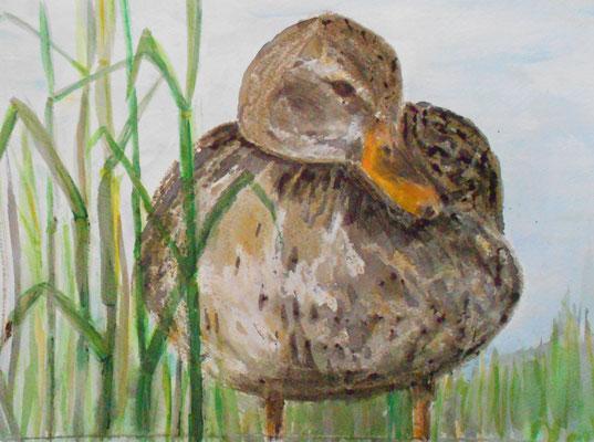 Ente  im Schilf, Aquarell, Wachskreide und Tusche 2014