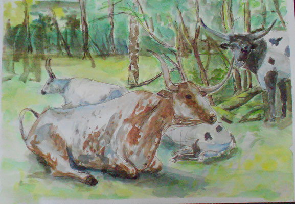 Longhornkuh liegend, Aquarell/Sepia 2014, verkauft