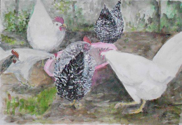 Hühnerhof im Berghof Redlikon, Aquarell/chin.Tusche, 30x40cm, 2019, verkauft