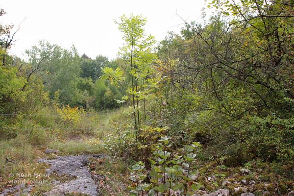 Ein Schlingnatter-Habitat aus dem Kanton Neuenburg.