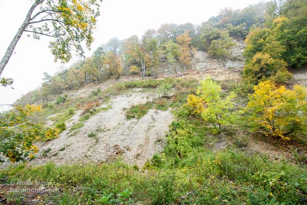 Geröllhalden - ein typisches Strukturelement des Juras - sind hervorragende Schlingnatter-Habitate.