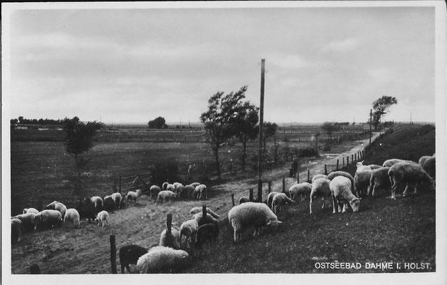 4 Deich beim jetzigern Übergang Sprüttenhus 1953