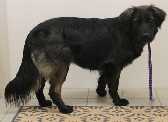 Olinka's erster Besuch im Hundesalon...