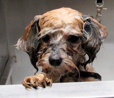 ...noch etwas misstrauisch in der Badewanne...