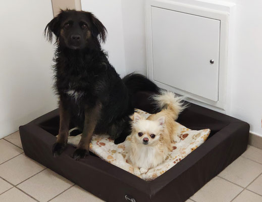 Olinka und Lerry