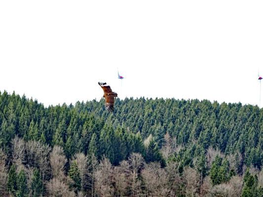 Greifvogel-Flugschau
