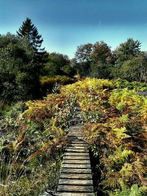 Brackvenn - Wandern auf Stegen