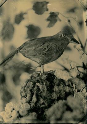 blackbird (june 2018)