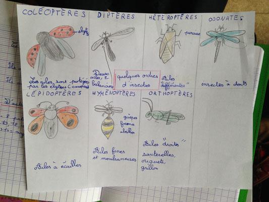 L'Atelier Vert, Éducation à l'environnement, Animation Nature
