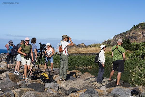 Birding at Lugar do Baixo, Madeira