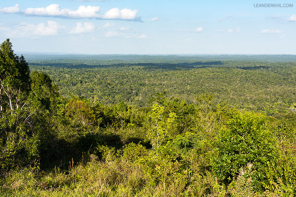 The forest can be overviewed from the escarpment