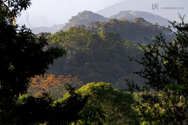 Das 1300 Hektar große, private Reservat schützt unersetzlichen Lebensraum weltweit bedrohter Arten