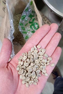 Grüne Kaffeebohnen vor dem Rösten