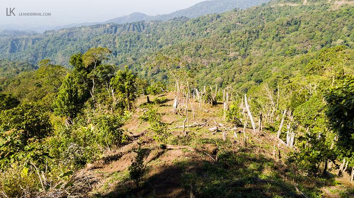 Neue Waldrodungen (hier nur wenige Kilometer von Los Tarrales entfernt) sind die größte Gefahr für stark gefährdete Waldspezialisten wie den Zapfenguan