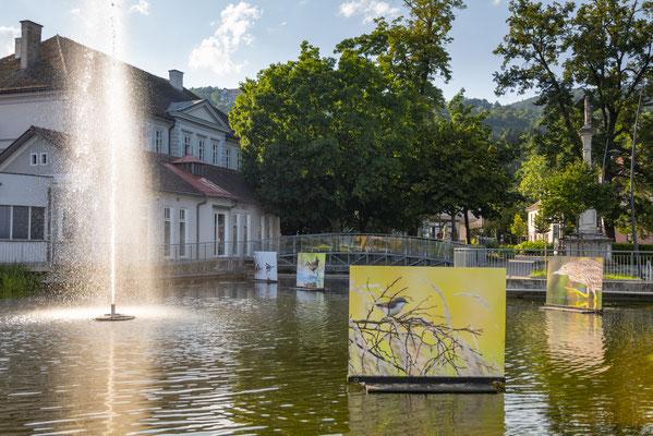 Schwimmende Bilder im Hartberger Stadtteich |Foto: Bernhard Bergmann