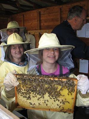 Eine Wabe mit Bienen, ein Erlebnis.