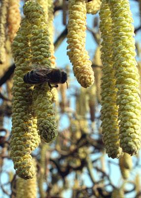 Unsere Bienen konnten das Angebot gut nutzen.