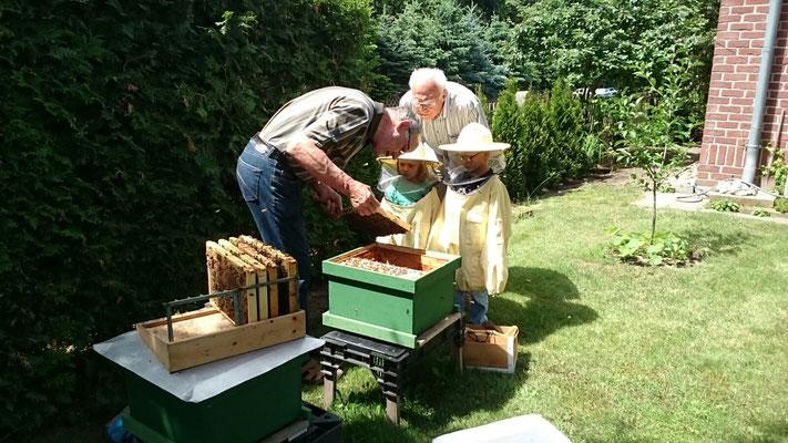 Kinder sind immer an Bienen interessiert.
