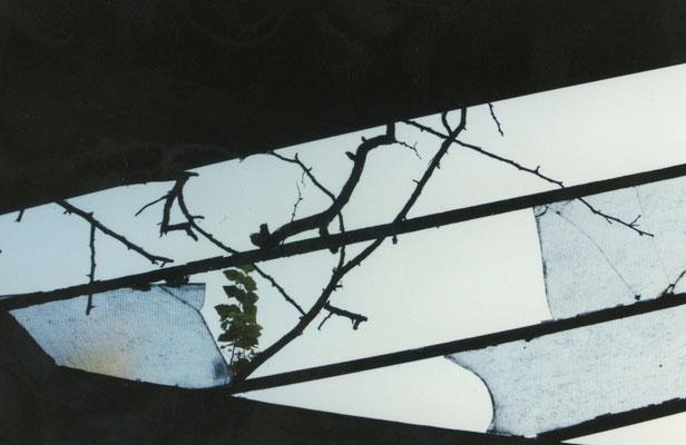 Blick durch das ruinöse Glasdach der Orangerie.