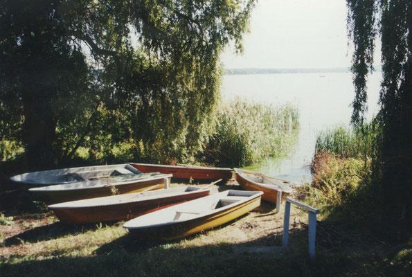 """""""Wie früher"""". Die kleine Bucht mit der riesigen Weide. Von hier aus paddelten Dichter, Übersetzerinnen, Autorenkinder und Schoßhündchen auf den Schwielowsee hinaus."""