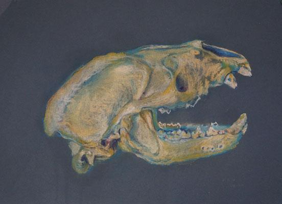 Marderschädel, 2000, Pastell auf Papier