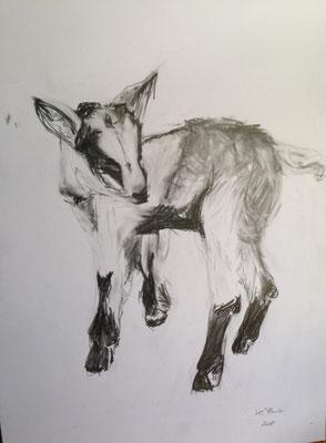 Junge Ziege, Bleistift, 30cm x 40cm, 2018