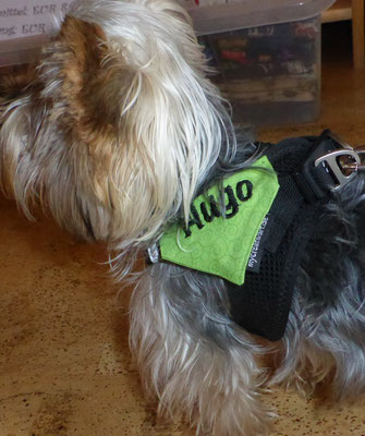 """Namens""""halstuch"""" am Hundegeschirr festgenäht"""