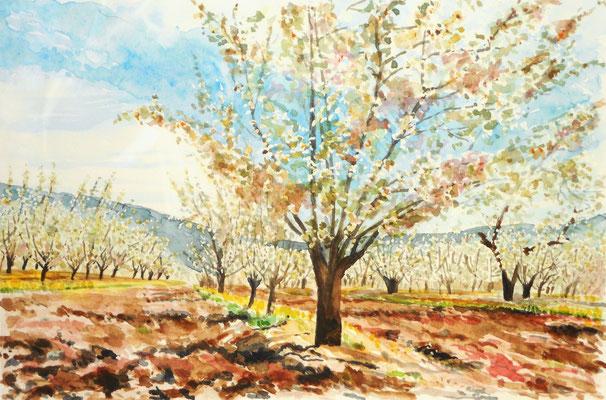 Arbres en fleur - aquarelle - 50 x 40