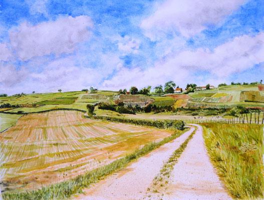 Chemin en Bourgogne - aquarelle - 70 x 50