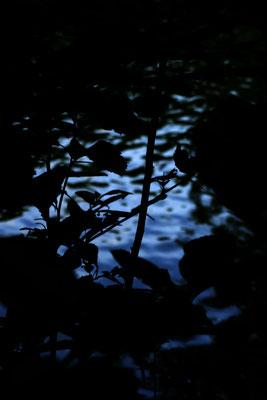 Wasser Ufer Baum Schwanenteich Gießen Frühling Herbst Sommer Fotografie