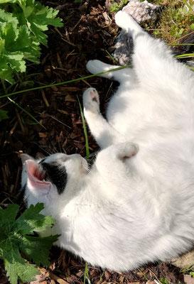 Hauskatze Katze Oberfranken