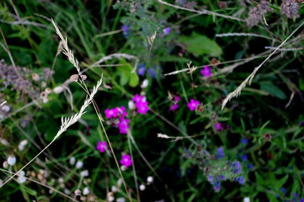 gräser wiese nervenkeks