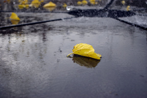 Herbst gelb Blatt Gießen Springbrunnen nervenkeks