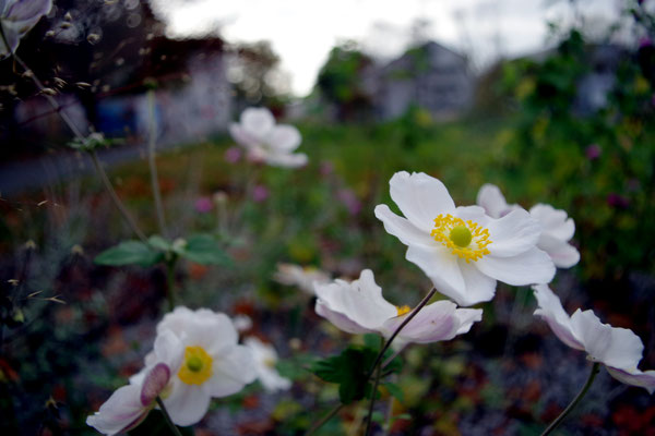 Herbst Blüten weiß Gießen nervenkeks