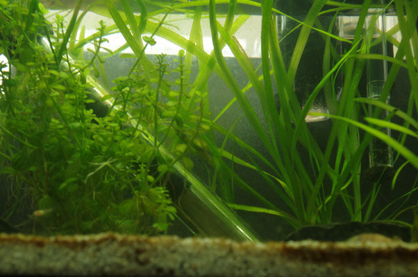 Nano Becken Aquarium Filter Schwamm Thermometer Stab Stimmung grün nervenkeks