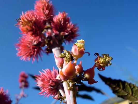 Garten unbekannte Blume nervenkeks CVJM Bayreuth
