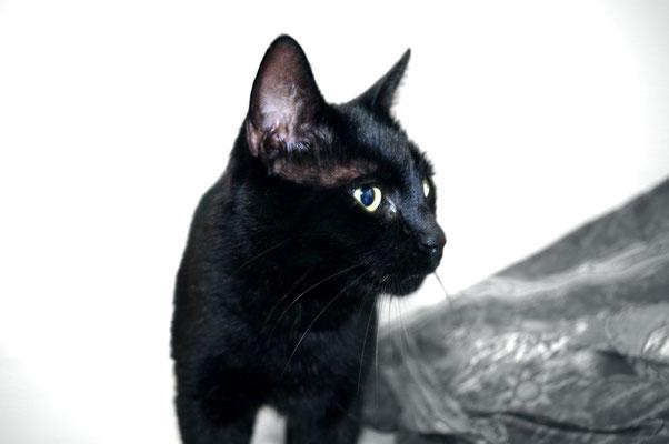 Nachbarskatze putzen putzig Katze neue Kamera ausprobieren GIMP nervenkeks
