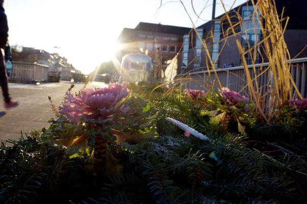 Gießen Elefantenklo Blumenkasten Winter Sonne