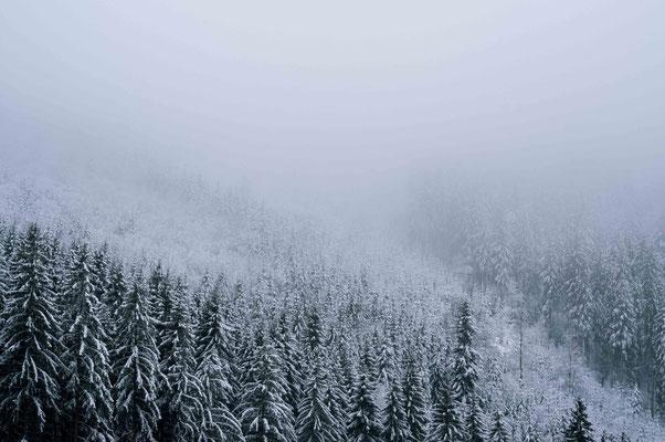 Trister Winterwald; Allgäu