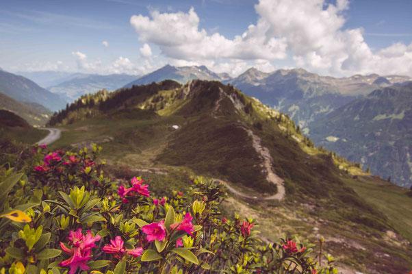 Blüten auf dem Berg; Garschurn Montafon